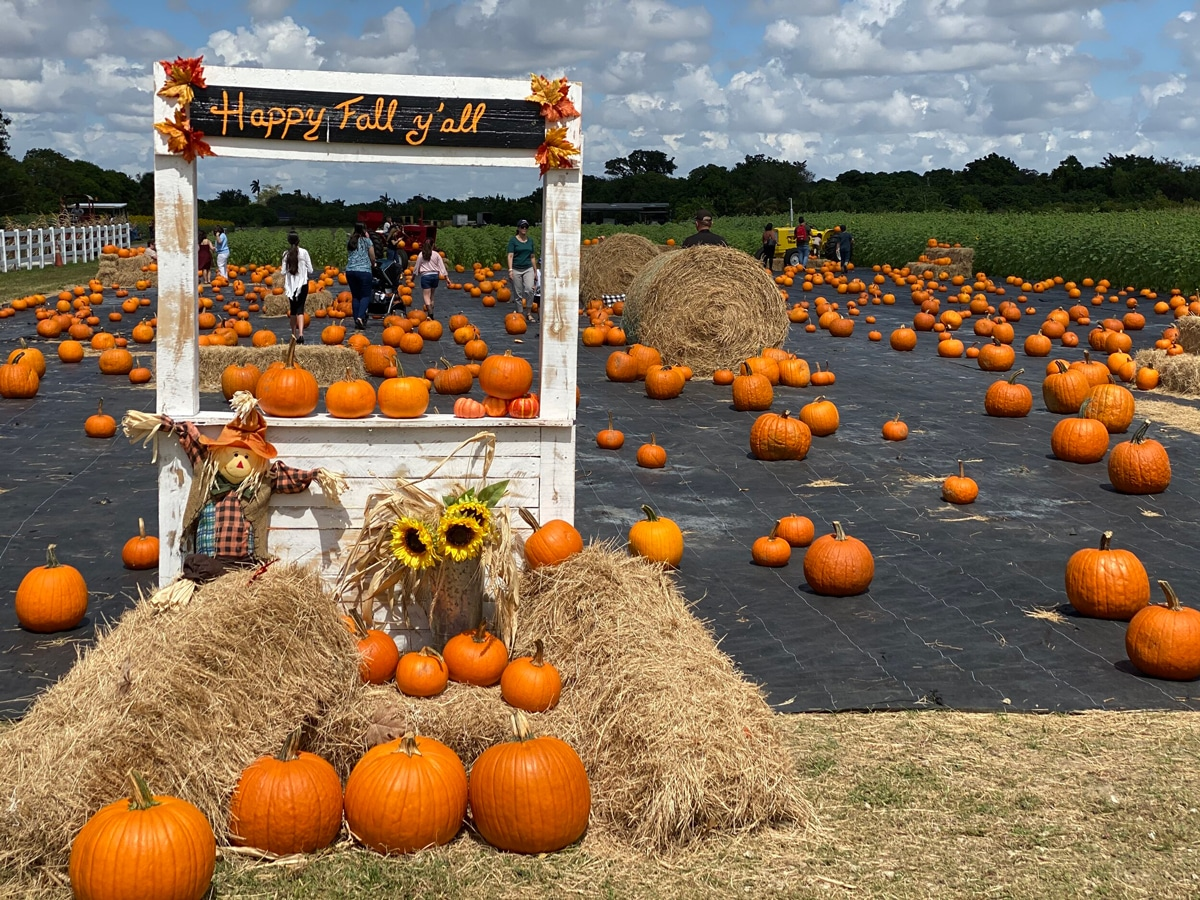 Pumpkin Patch in Homestead at The Berry Farms
