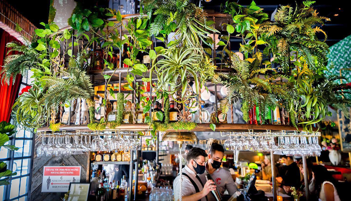 The Gramercy New Restaurant in Coral Gables bar with plants above