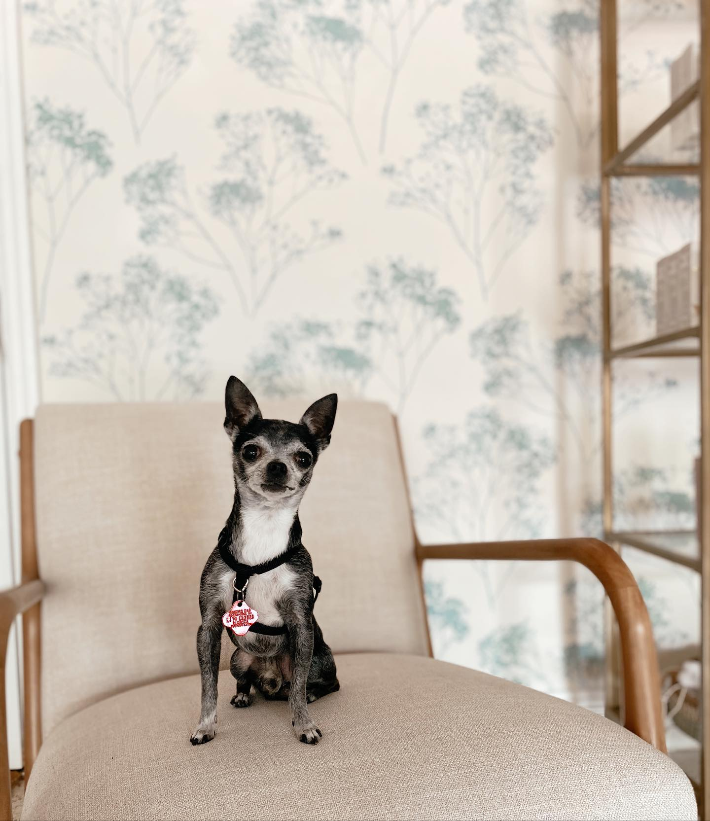 Natural Miami Facials Habits Skin Lab in Little Havana cute puppy on chair